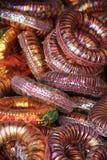 Indiańskie kolorowe bransoletki Zdjęcia Stock