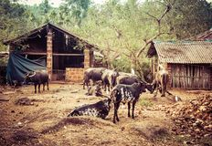 Indianów zwierzęta domowe: Bizony, ptaki, psy obrazy stock