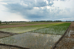 Indian Agriculture royalty free stock photos