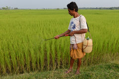 Indian Agriculture Stock Photography