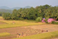 Indian agriculture stock image