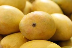 Indian alphonso mangoes Stock Images
