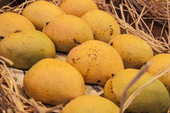 Indian alphonso mangoes. In Mumbai city, india. That's the king of indian fruits Stock Images
