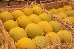 Indian alphonso mangoes Royalty Free Stock Photos