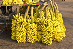 Indian bananas Royalty Free Stock Photos