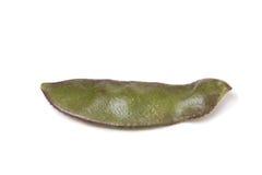 Indian Bean Royalty Free Stock Image