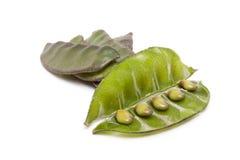 Indian Bean Stock Image