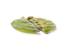 Indian Bean Stock Photo