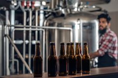 Indianr male manufacturer presenting craft beer in the microbrewery. Indian bearded tattooed hipster male manufacturer presenting craft beer in the microbrewery Stock Photos