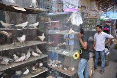 Indian bird market Stock Images
