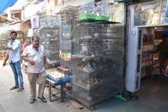 Indian bird market Stock Photography