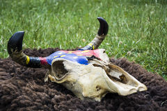 Indian bison skull Stock Photo
