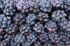 Indian black grapes Stock Images