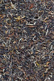 Indian black tea Royalty Free Stock Photo