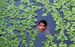 Indian boy. A village boy playing with water-hyacinth Stock Photos