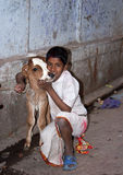 Indian boy and his calf Royalty Free Stock Photography