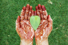 Indian bride hands holding a green leaf Royalty Free Stock Photos
