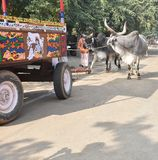 Indian bull with wooden cart stock images