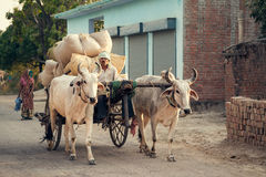 Indian bullock cart or ox cart. Run by man in village Stock Photo
