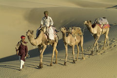 Indian Camel Caravan 6 Stock Image
