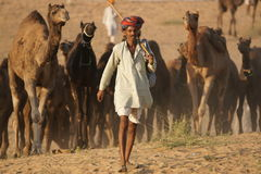 Indian Camel Fair Royalty Free Stock Photography