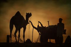 Camel vendors from the city of Pushkar,Pushkar Mela Stock Images