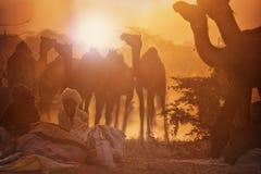 Camel vendors from the city of Pushkar,Pushkar Mela stock photography