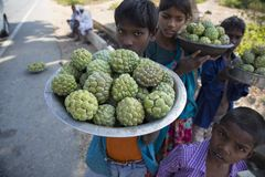 Children Selling Custard Apples by Roadside stock photos