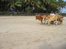 Indian coast. On the Indian Ocean Coast, Maharashtra, India Stock Photos