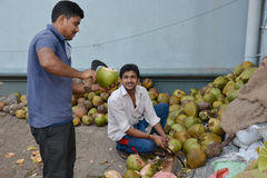 Indian coconut Stock Photos