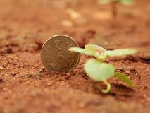 Indian Coin Natural royalty free stock photography
