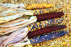 Indian colorful Maize-Fall, Harvest and Thanksgiving symbols Royalty Free Stock Photography