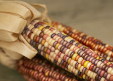 Indian corn Stock Image