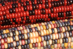Indian Corn Stock Images