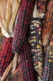 Indian Corn Royalty Free Stock Photography