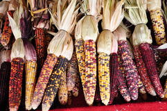 Free Indian Corn Royalty Free Stock Photography - 12345127