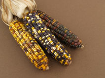 Indian corn Stock Photos