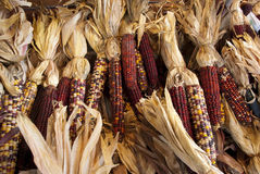 Indian corn. Pile of indian corn on farmers market stand in the fall Royalty Free Stock Photo