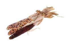 Indian corn Royalty Free Stock Photos