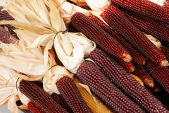 Indian Corn. A pile of red Indian Corn Stock Image