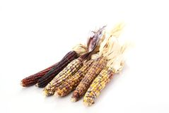 Indian Corn. On the cob with tassels Royalty Free Stock Photography