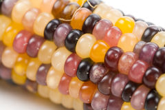 Free Indian Corn Royalty Free Stock Photos - 6907818