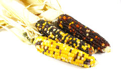 Indian Corn Royalty Free Stock Photos