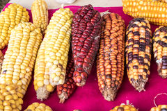 Indian corn in basket Stock Images