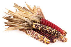 Indian corn bunch Stock Images