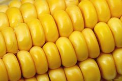 Indian corn close-up Royalty Free Stock Photo