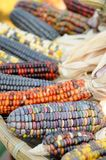 Indian corn close up Stock Photo