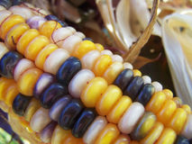 Indian corn close up Royalty Free Stock Photography