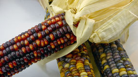 Indian corn closeup Royalty Free Stock Photography