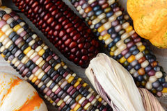 Indian Corn and Gourds Stock Photography